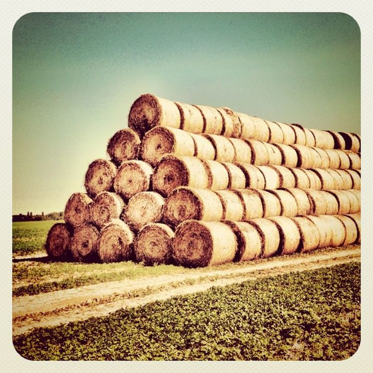 Good morning ? #summer is #over #hungary #hay #stack #jj #jj_forum #photooftheday #feketeerdo #earlybirdlove #alaniskosummer2011_hungary Summer Hungary Photooftheday Hay Over Jj  Earlybirdlove Stack Jj_forum Alaniskosummer2011_hungary Feketeerdo