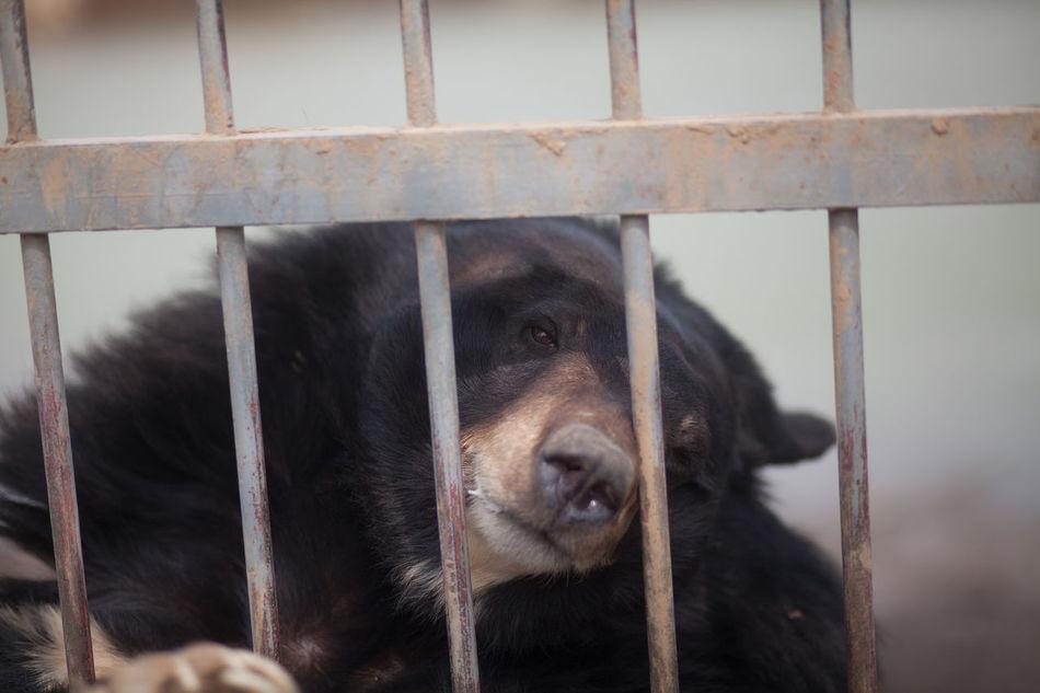 Beautiful stock photos of bear, Animal Themes, Bear, Captivity, Close-Up