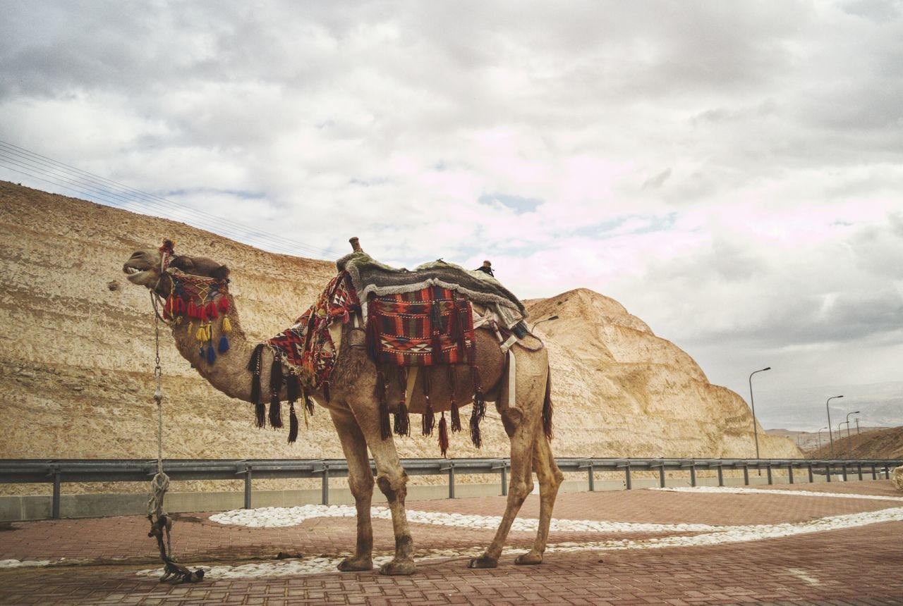 Domestic Animals Cloud - Sky No People Animal Themes Camel Finding New Frontiers Traveling Home For The Holidays EyeEm Team Outdoors Deadsea יםהמלח
