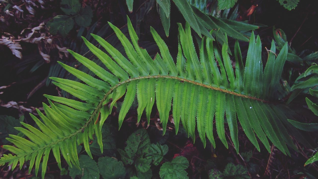 Fern Plants Are Friends Creative Loverofnature Close Up Nature Nature_collection EyeEm Nature Lover Adventure