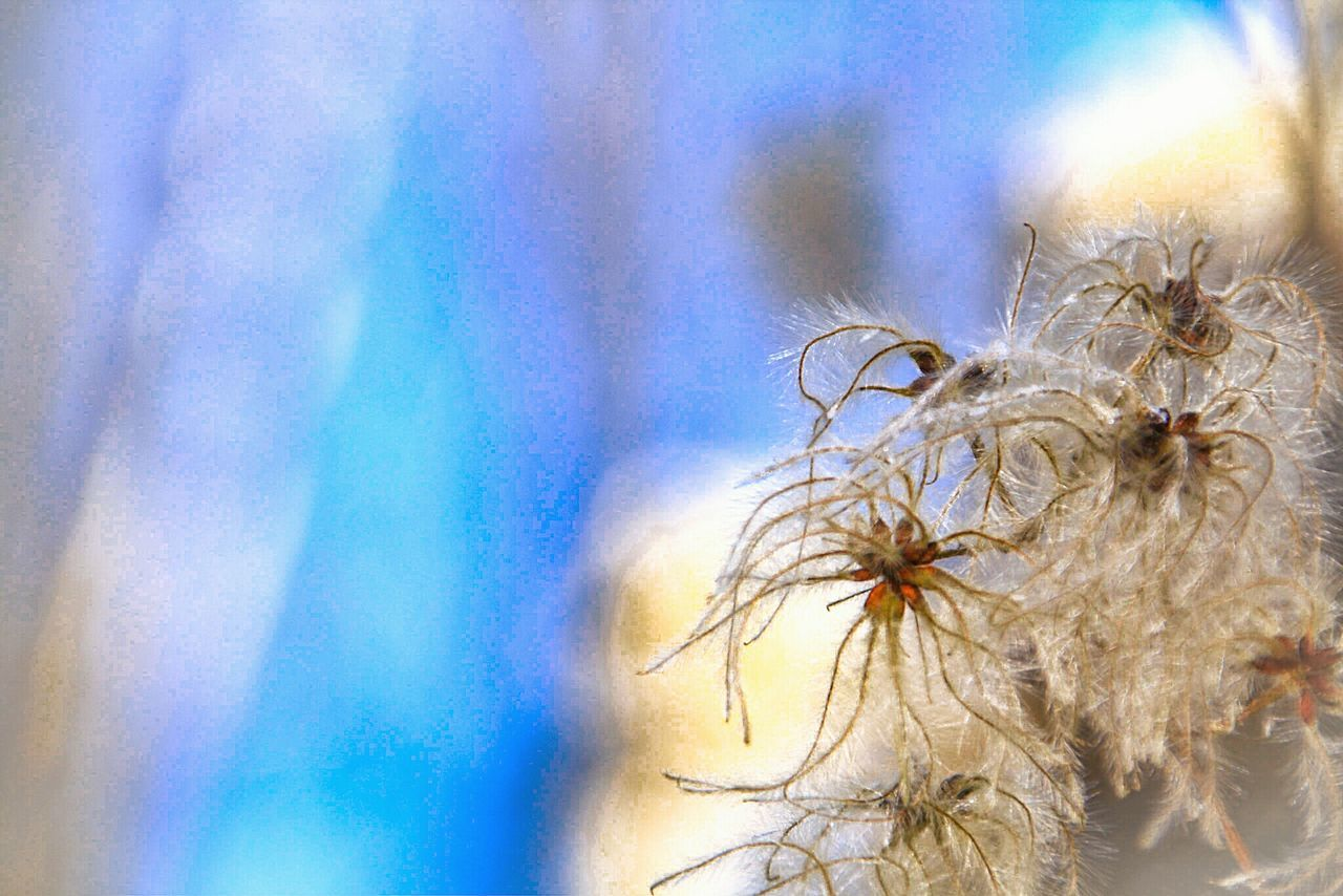 Close-up Nature Cold Temperature Tree Beauty In Nature Outdoors Fragility Day No People EyeEm Gallery Check This Out Focus On Foreground Seeds Photography Seeds Seeds Flower Abstract