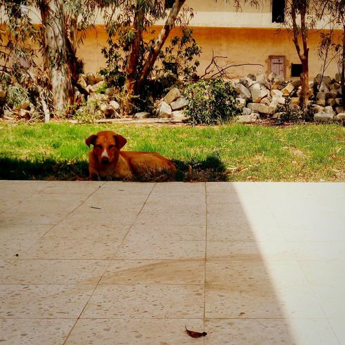 Dog No People Nature Pets Mammal Animal Themes One Animal Outdoors Domestic Animals Day Architecture Built Structure Building Exterior First Eyeem Photo