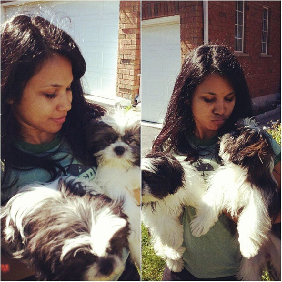 Aryalaylaadventures Puppies Cutiebabies Mustlovedogs romeocosmostillrule @derek_lall @tazlife1