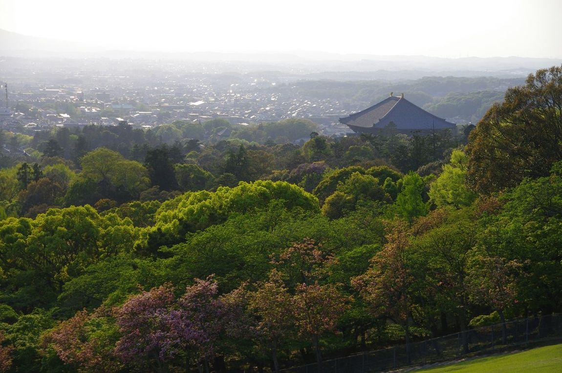 Walking Around Landscape Nara Toudaiji