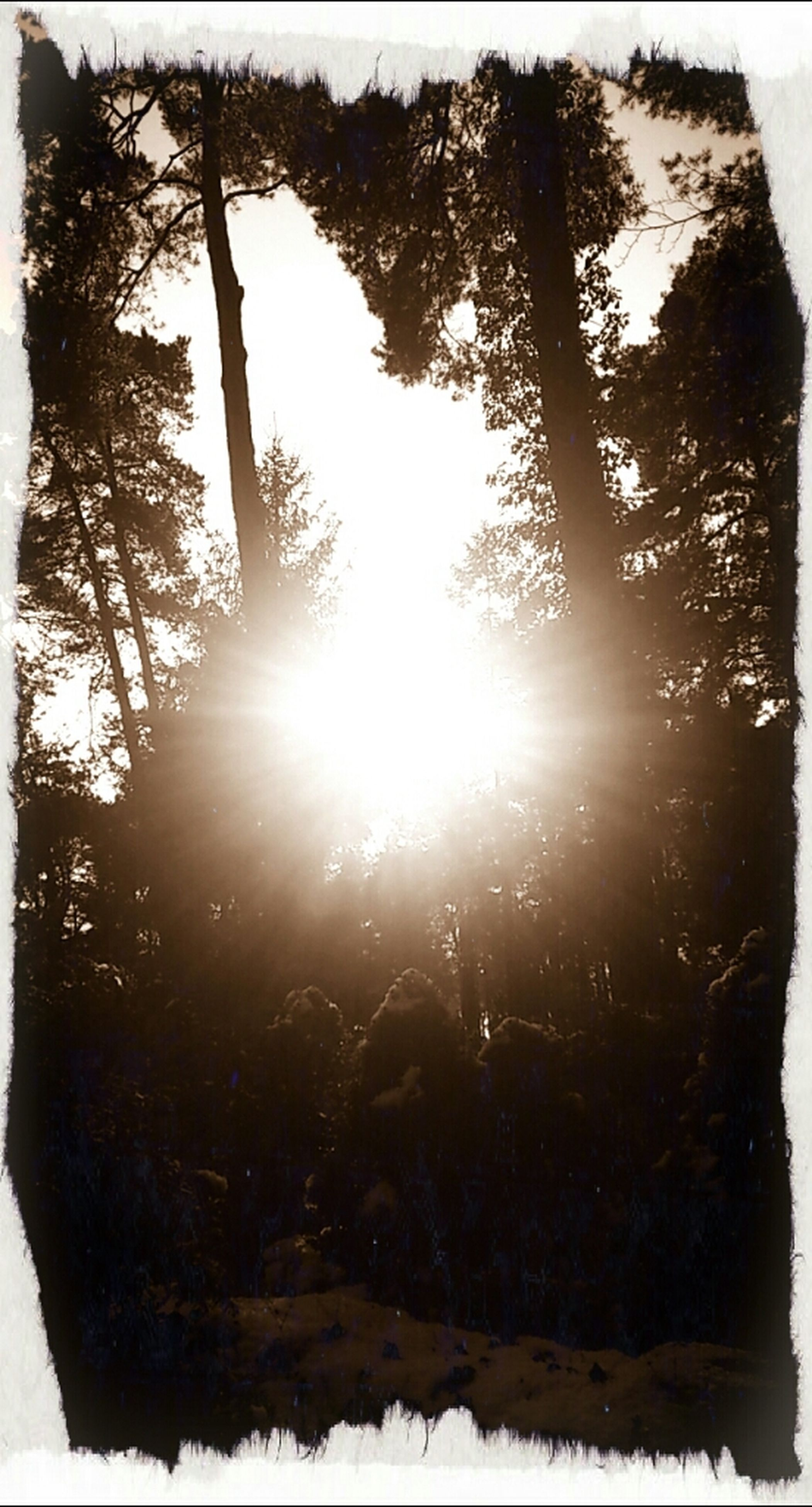sun, transfer print, sunbeam, tree, sunlight, lens flare, tranquility, auto post production filter, tranquil scene, nature, beauty in nature, scenics, winter, sky, silhouette, back lit, snow, bright, sunny, tree trunk