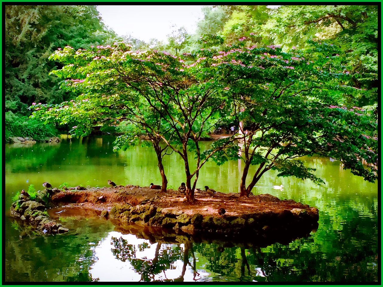 tree, water, nature, reflection, tranquility, no people, growth, lake, outdoors, beauty in nature, plant, forest, day, scenics