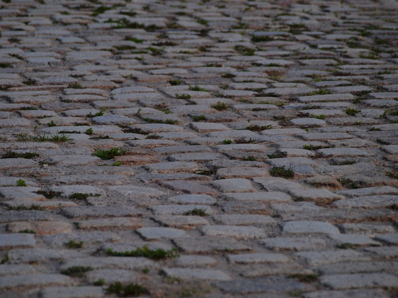Backgrounds Cobbled Cobblestone Day Footpath Full Frame Intricacy No People Outdoors Pattern Paving Stone Repetition Selective Focus Stone Material Surface Level Textured  The Way Forward