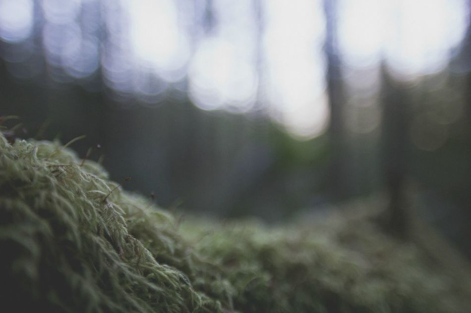 Moss detail (1) Beauty In Nature Bokeh Botany Close-up Day Detail Explore Extreme Close-up Focus On Foreground Forest Forestwalk Growth Hike Lichen Nature Non-urban Scene Outdoors Plant Selective Focus Tranquil Scene Tranquility Tree Wildlife & Nature WoodLand Woods