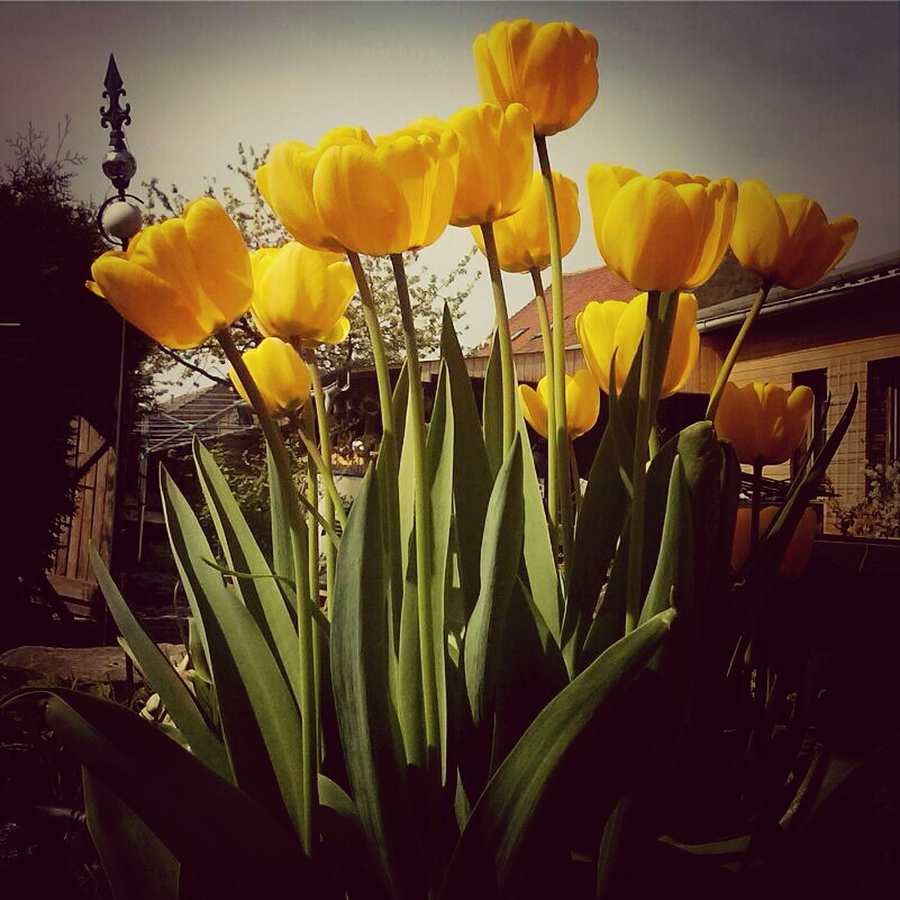 Sun and Flowers.. Spring is awesome :)