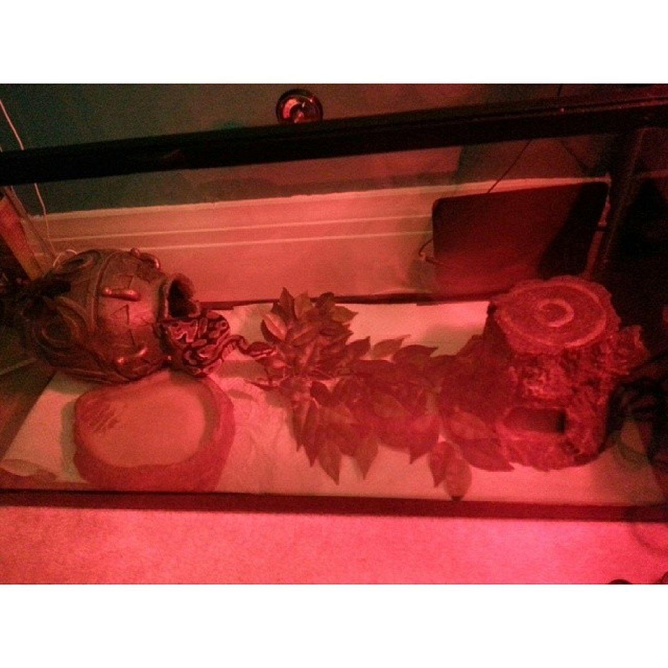 @roisin5449 Feedingtime ? Snakes Junglebook Madcreeps