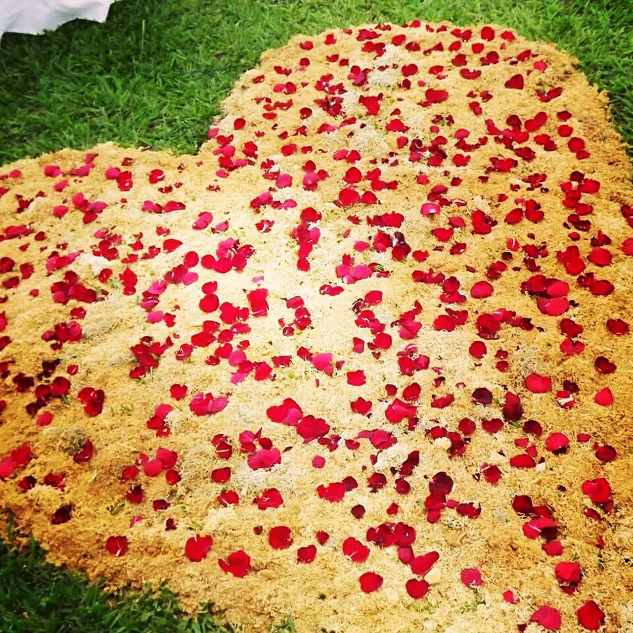 Hart Wedding Photography Honduras ♥ High Angle View No People Red Day Outdoors Close-up Nature Freshness