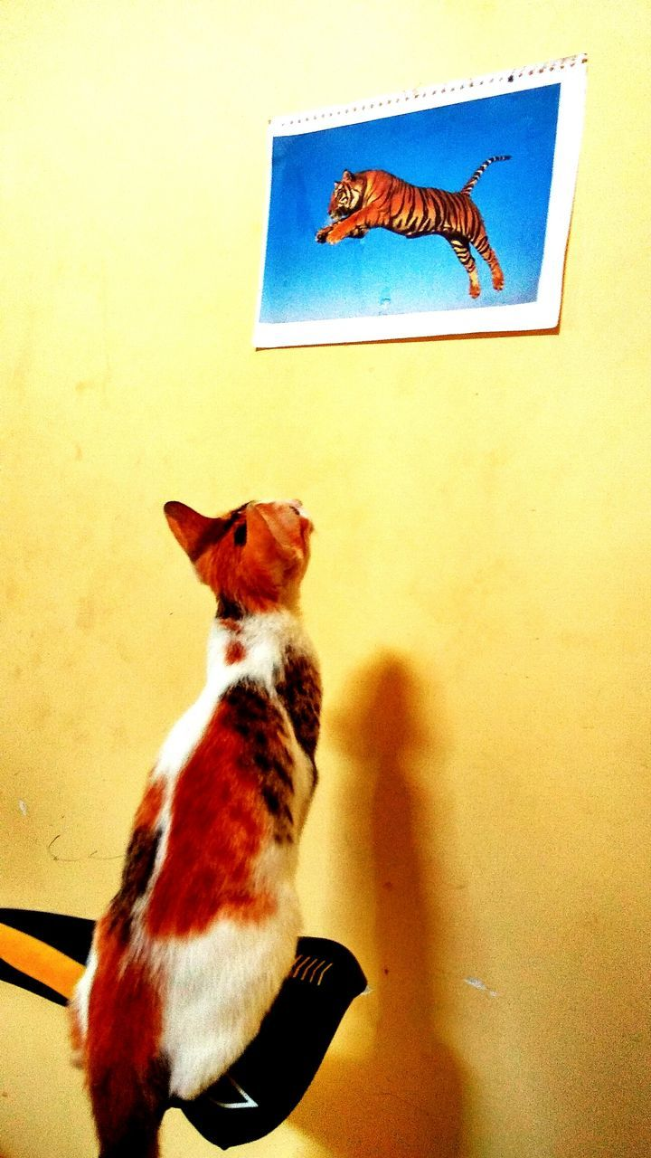 animal themes, one animal, domestic cat, domestic animals, indoors, pets, no people, mammal, sitting, day, close-up