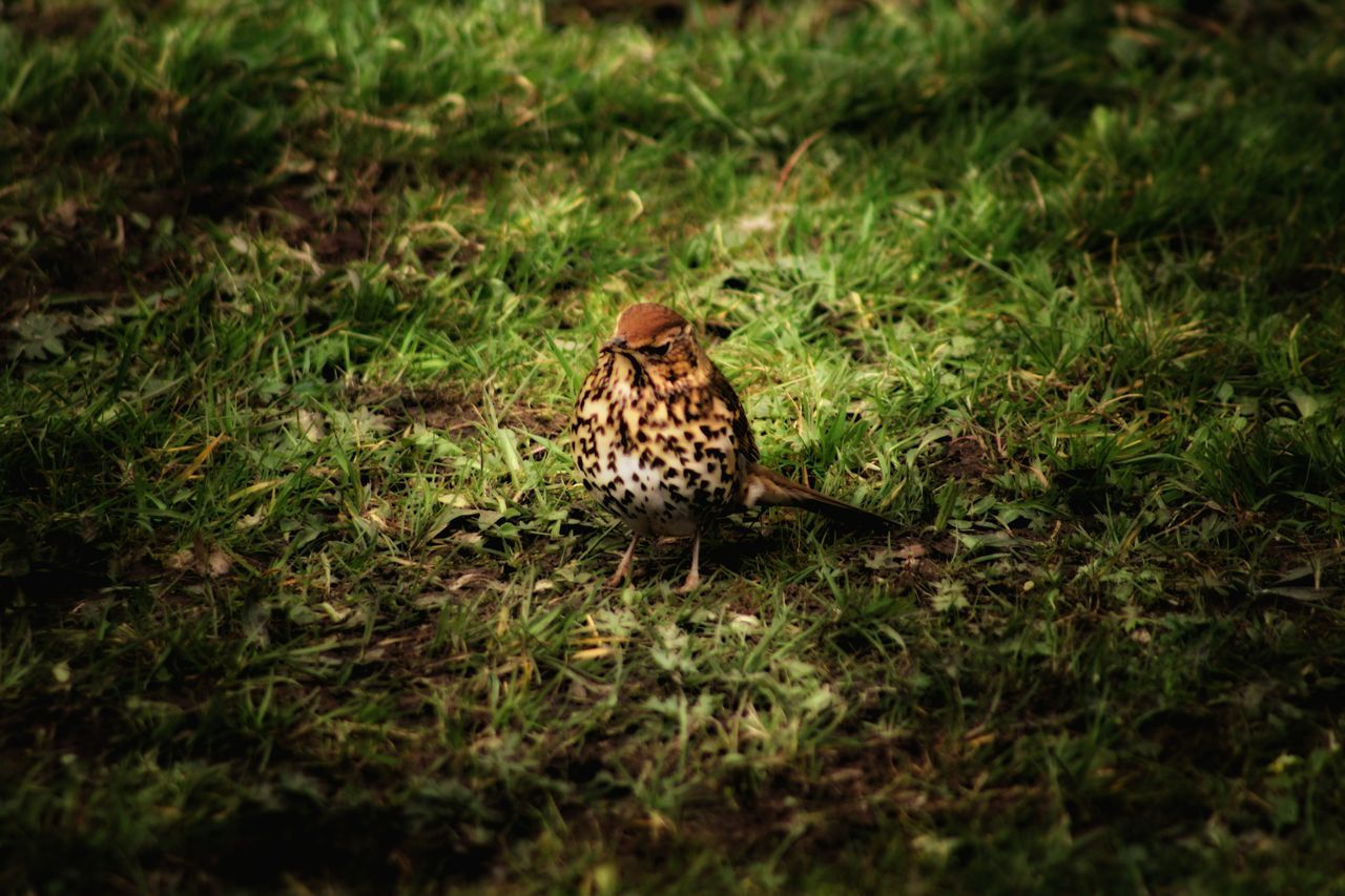 Better Look Twice Thrush Birds Of EyeEm  Bird Camouflaged Natures Magic Birds Our Best Pics EyeEm Gallery Nature_collection Woodland Walk Forest Floor Nature On Your Doorstep The Great Outdoors EyeEm Best Shots Showing Imperfection Song Birds Exceptional Photographs At One With Nature EyeEm Birds EyeEm Animal Lover EyeEm Nature Lover Spring Birds