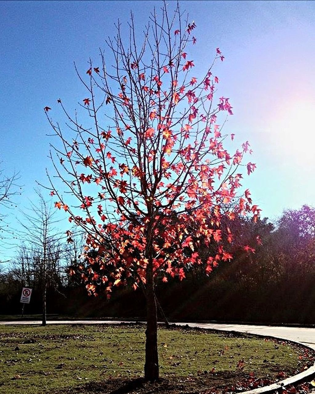 tree, tranquility, tranquil scene, beauty in nature, nature, branch, bare tree, growth, outdoors, day, scenics, sky, autumn, no people, landscape, flower, freshness