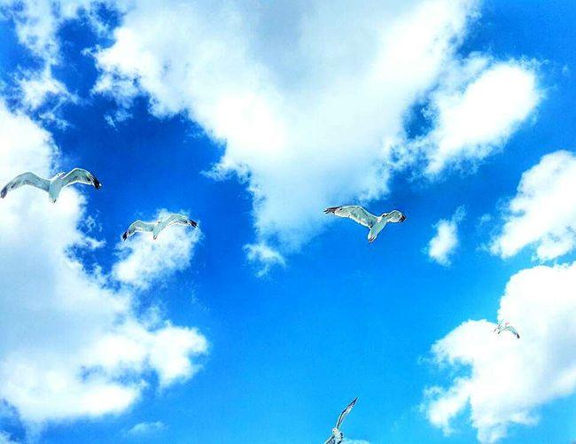 Hayatkısakuşlaruçuyor 🐦 Mavihuydur 💙🎈🎈⛅ Mavisonsuzluk Flying Bird Animal Themes Sky Blue Beauty In Nature Outdoors Cloud Spread Wings Gokyuzu Bulutlar Kuslar Mavigökyüzü Mavilikler