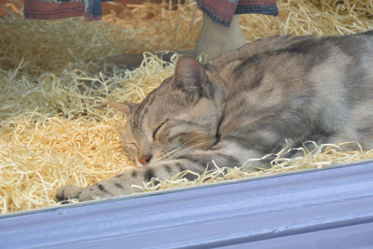 Animal Animal Themes Cat Domestic Animals Domestic Cat Eye4photography  From My Point Of View In The Window Nikon No People One Animal Purist In Photography Purist No Edit No Filter Relaxation Sleeping Sleeping Cat The Purist (no Edit, No Filter)