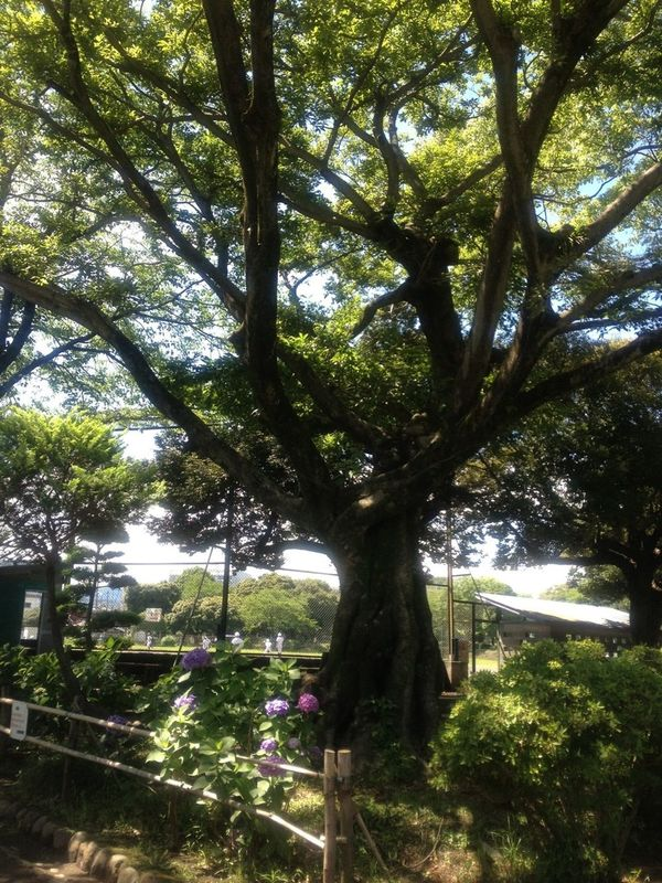 TreePorn One Fine Day Japan Scenery