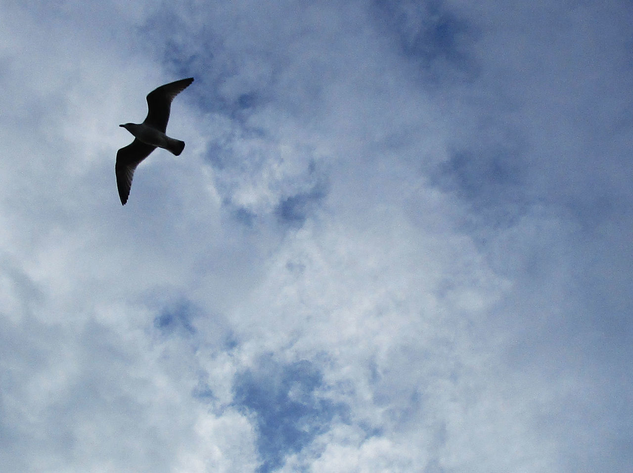 Bird Cloud - Sky Flying Low Angle View Nature No People One Animal Silhouette Sky Spread Wings
