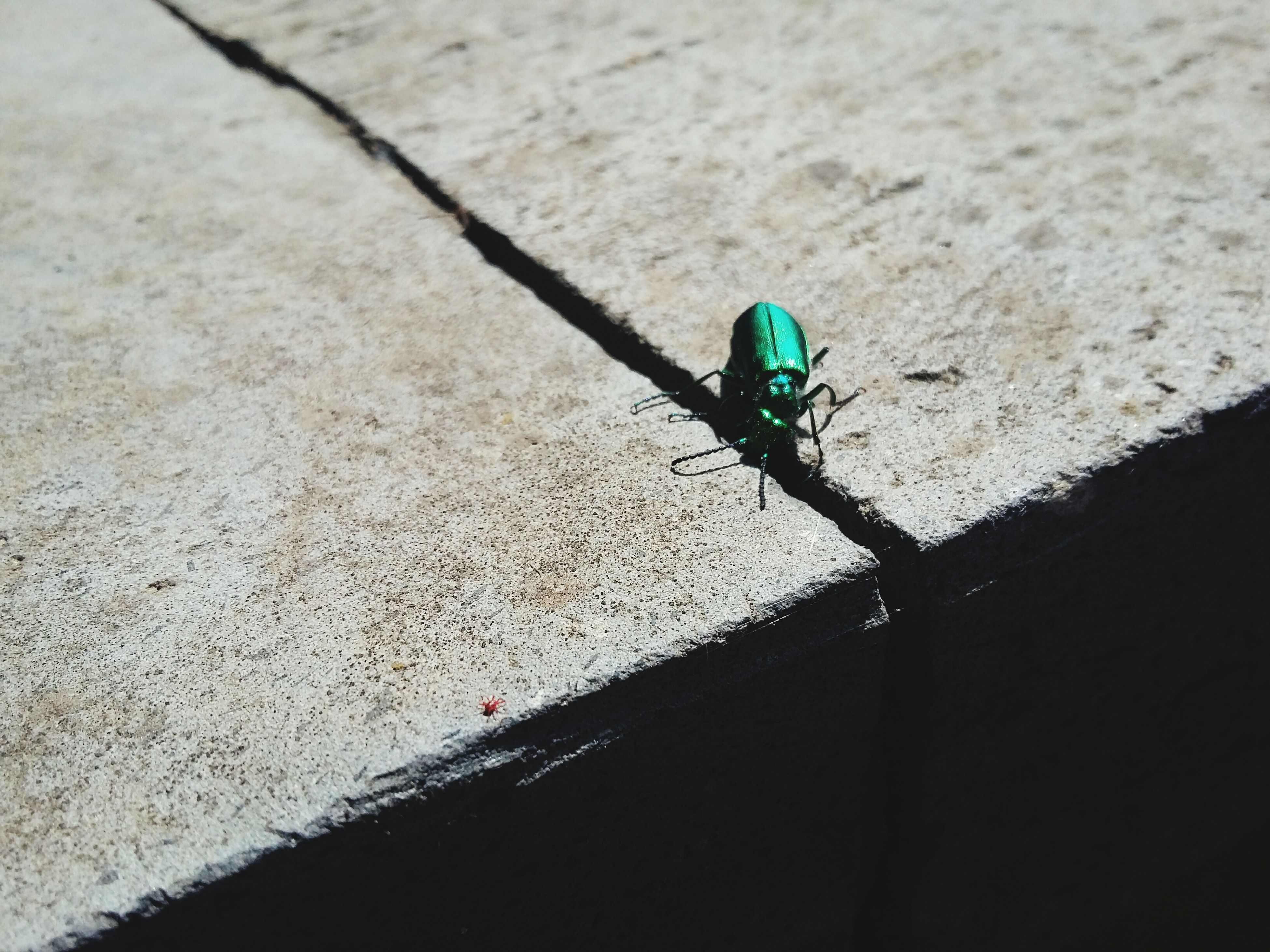 one animal, animal themes, insect, animals in the wild, wildlife, full length, high angle view, day, shadow, outdoors, no people, close-up, sunlight, nature, street, road, wall - building feature, selective focus, zoology, focus on foreground