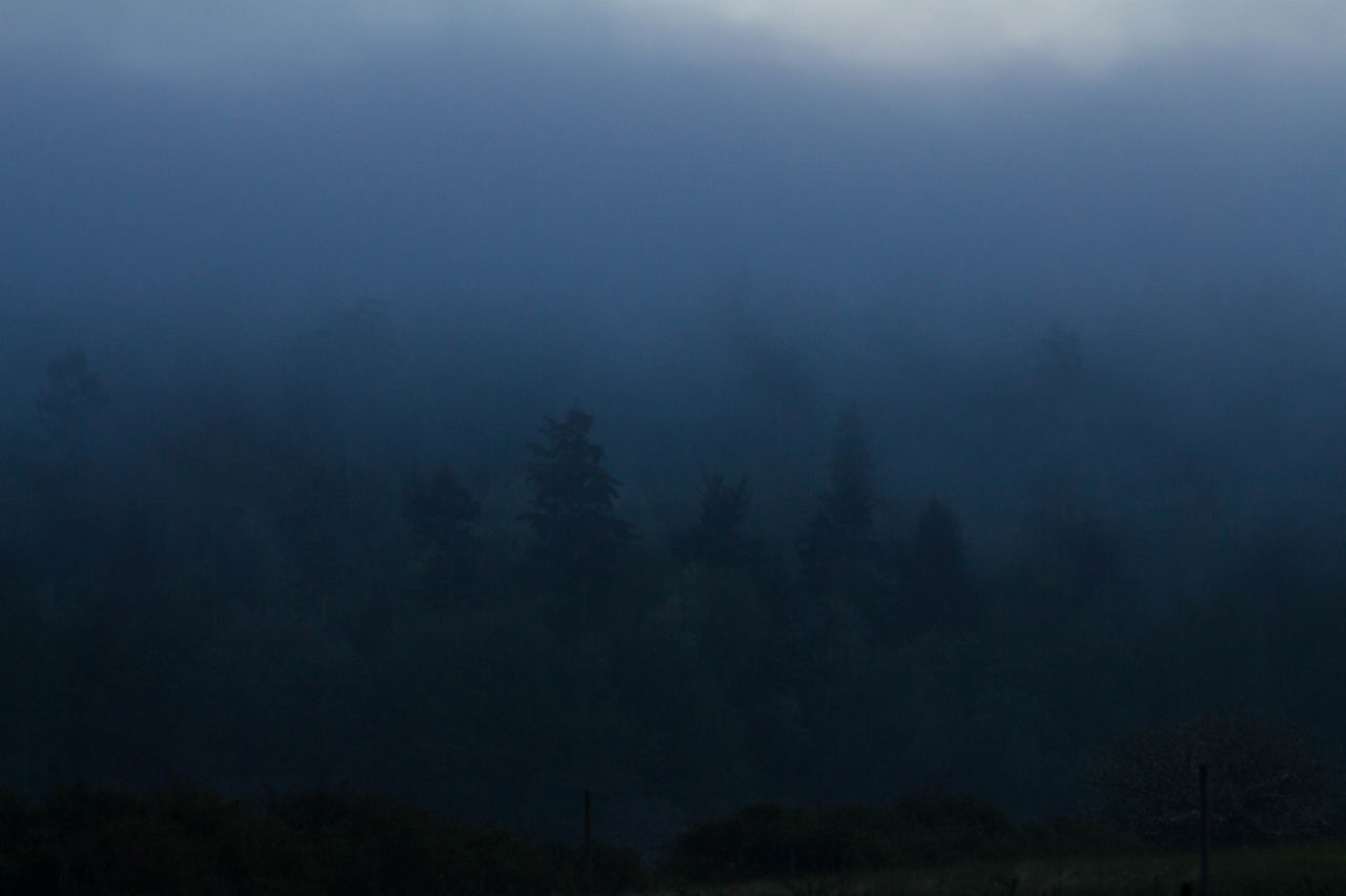 nature, tree, tranquility, fog, tranquil scene, beauty in nature, landscape, no people, scenics, outdoors, forest, night, hazy, sky