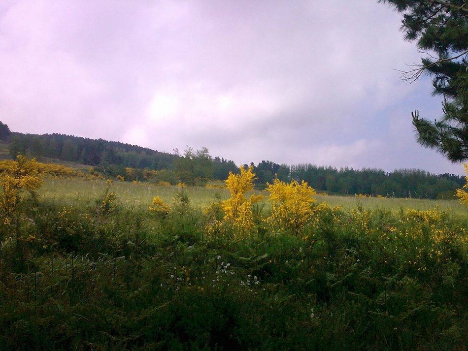 Yellow in the Green under a Cloud Sky Beauty In Nature Cloud - Sky Flower Ginestra Landscape Sky And Clouds Yellow The Great Outdoors - 2016 EyeEm Awards