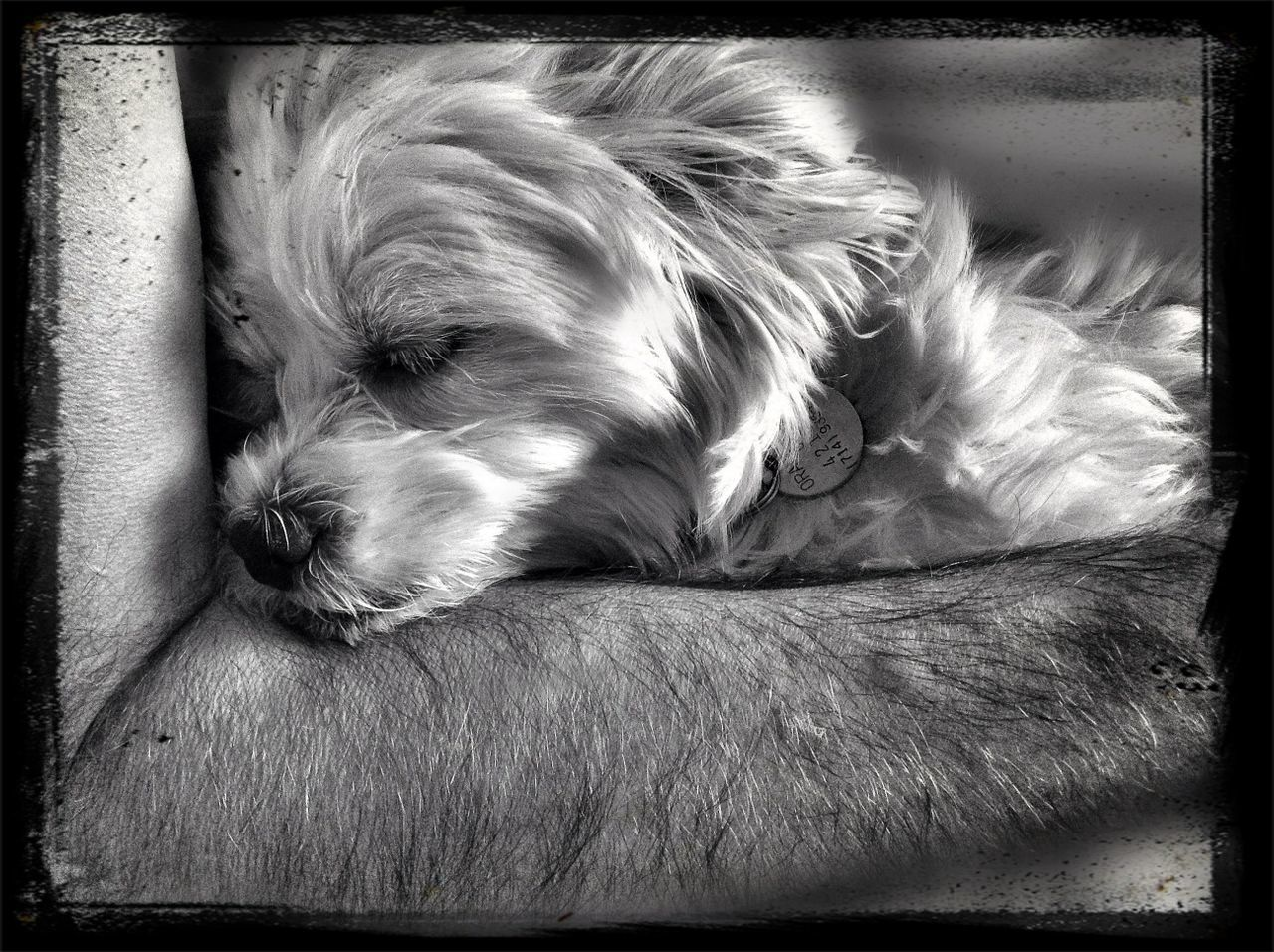dog, pets, one animal, animal themes, domestic animals, sleeping, mammal, no people, relaxation, close-up, lying down, indoors, day