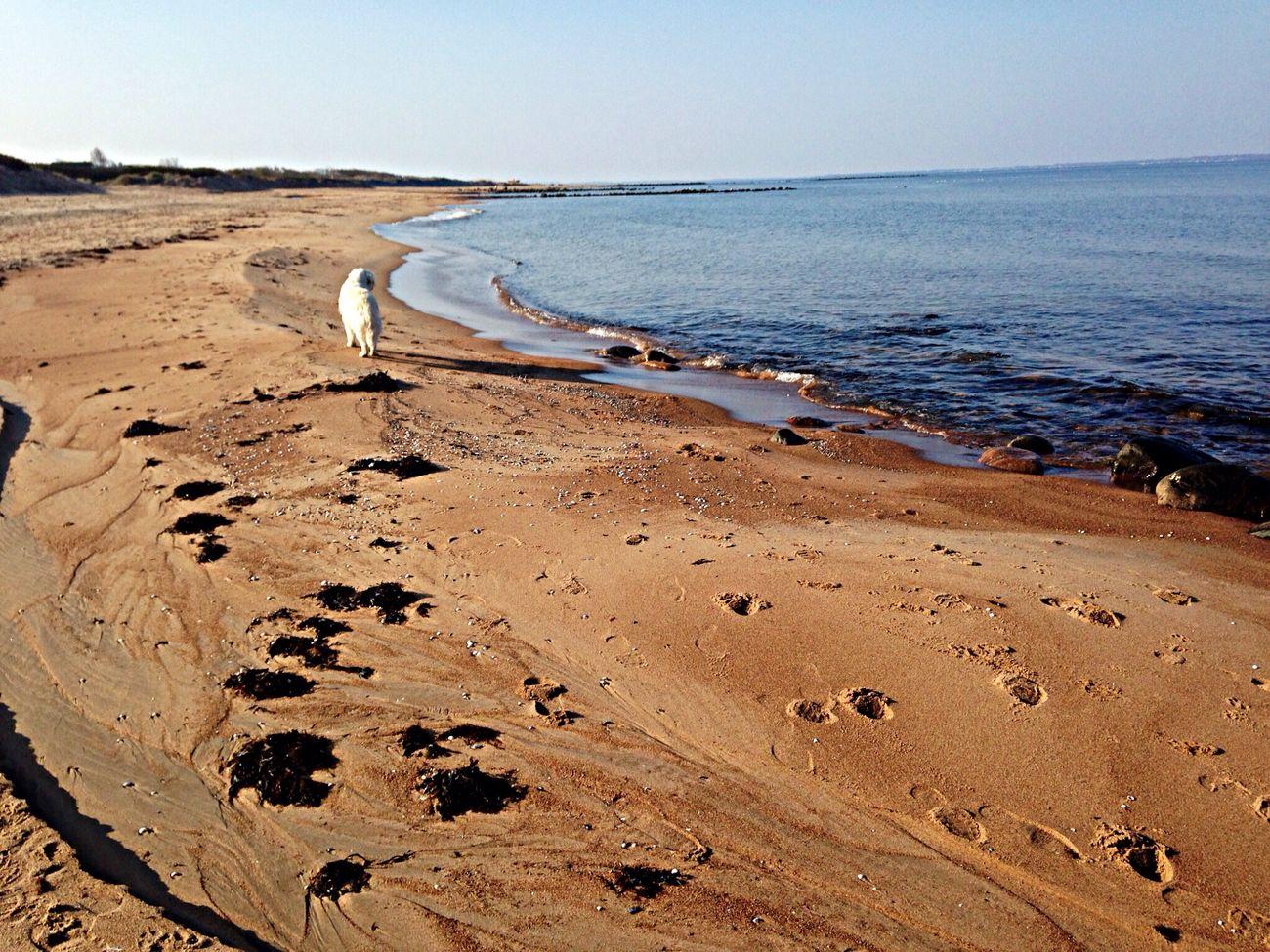 Golden Bay Watch Dogs Golden Golden Retriever Life Is A Beach