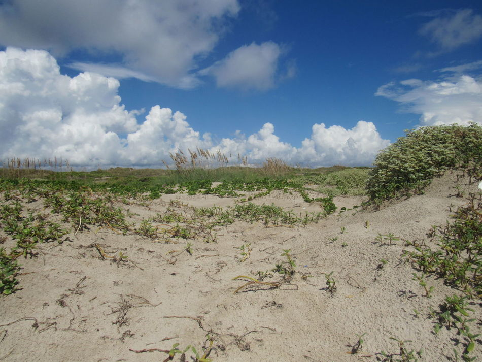 The Dunes Barron Land Big Clouds Blue Sky White Clouds Bushes Cloud_collection  Daylight Far Away Lands Green Color Gulf Of Mexico Hot Sand Hot Weather Landscape Looking Far Away Looking North No Edit/no Filter No Pathway Sandy Beach Sandy Dunes Up High Vines