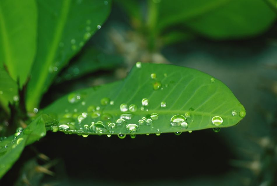 Beautiful stock photos of leaf, Day, Detail, Dew, Drop