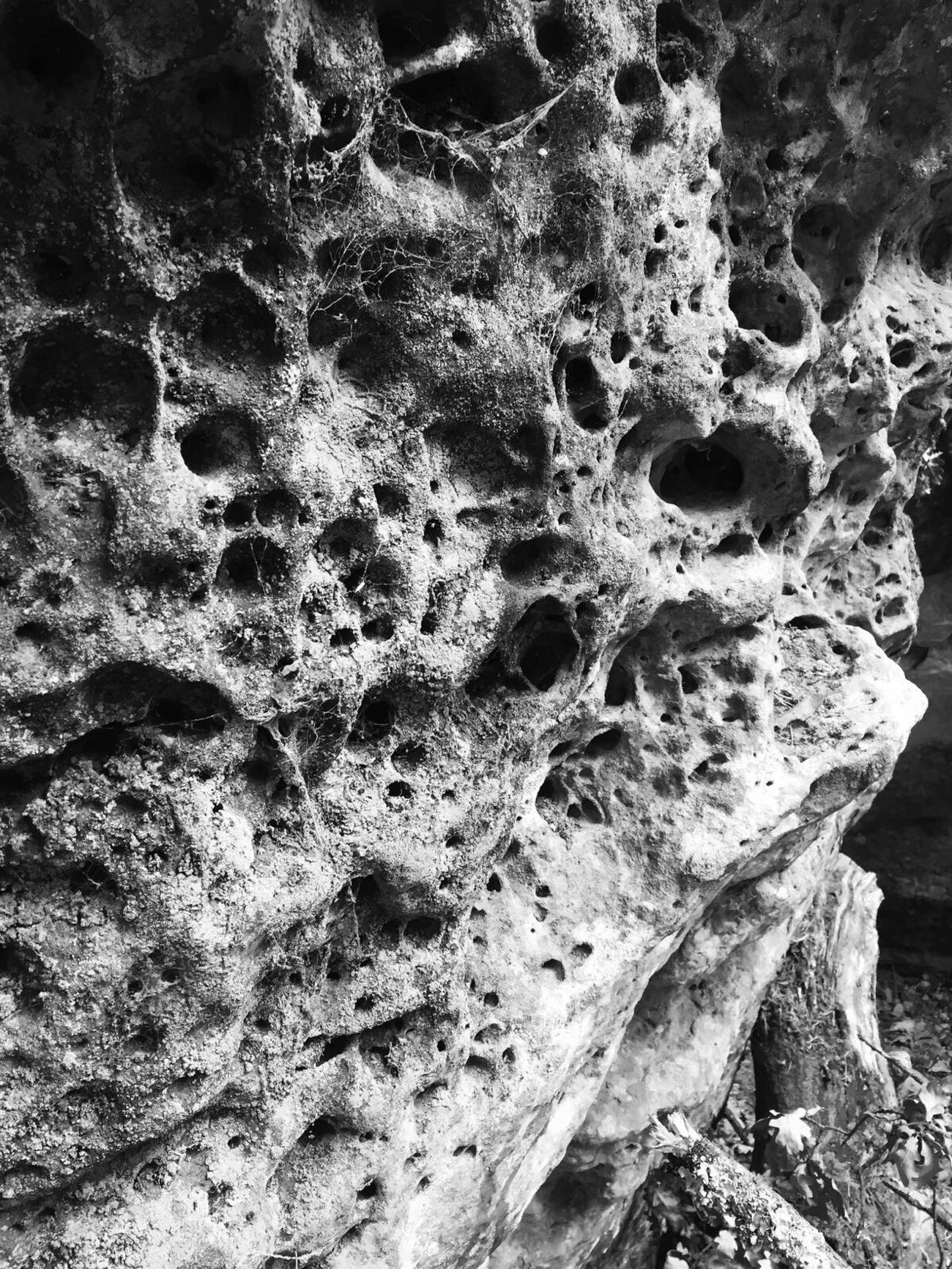 Fontaineblau rocks ✌🏻️ Rocks Holes Holes In Rock Holes In Rocks Bnw Bnw_friday_eyeemchallenge Fontainebleau France Close-up Textured  Bark Tree Trunk Weathered Damaged Growth Nature Day Focus On Foreground Natural Condition Botany No People