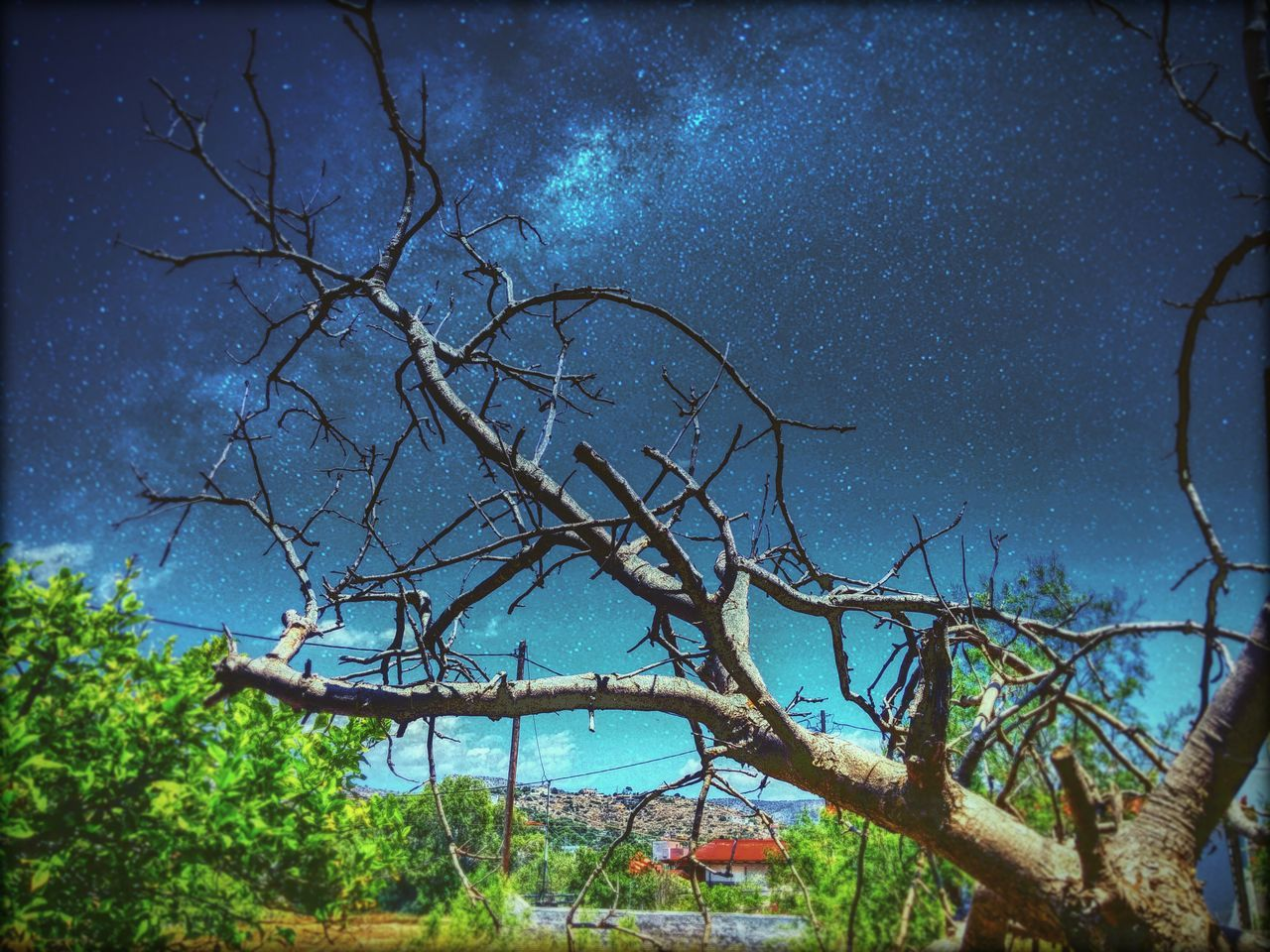 tree, no people, nature, branch, outdoors, sky, tranquility, bare tree, scenics, beauty in nature, blue, night, star - space, tree trunk, growth, astronomy, galaxy