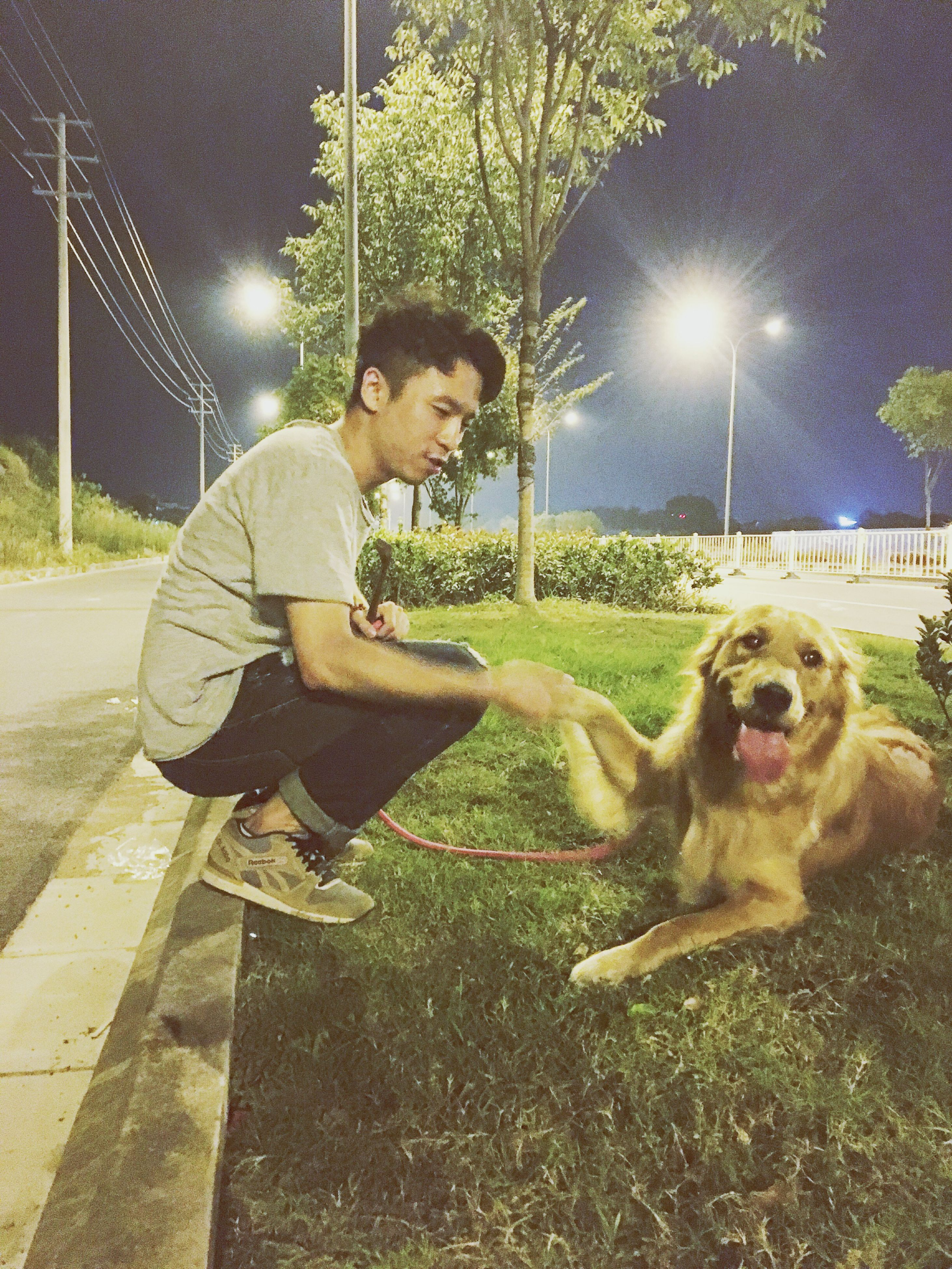 dog, lifestyles, illuminated, leisure activity, pets, tree, casual clothing, grass, full length, night, person, one animal, park - man made space, mammal, childhood, playing, domestic animals, sitting, elementary age, green color, innocence, field, outdoors, park