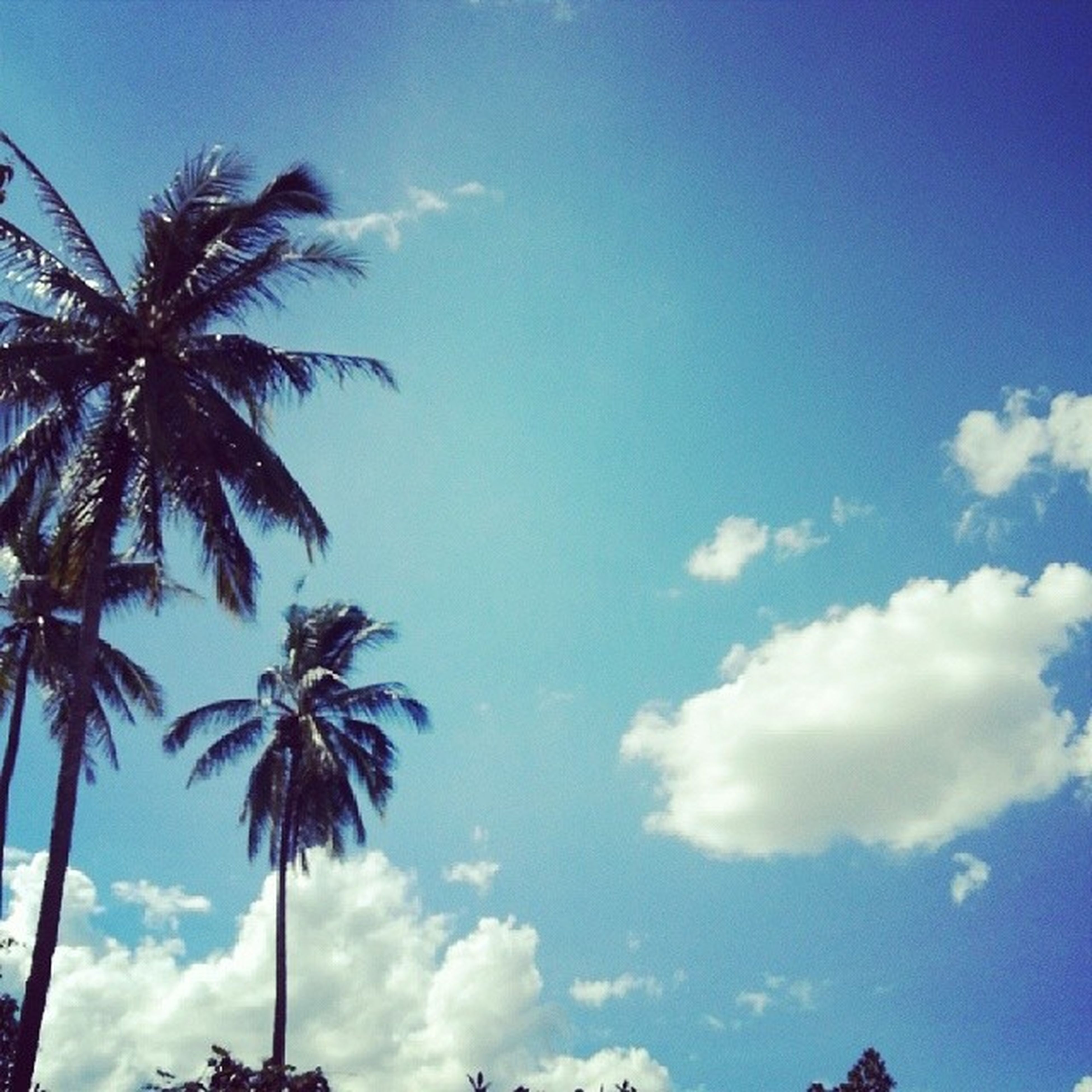 low angle view, palm tree, sky, tree, blue, silhouette, cloud - sky, beauty in nature, cloud, nature, growth, tranquility, scenics, tree trunk, outdoors, cloudy, no people, coconut palm tree, tranquil scene, day