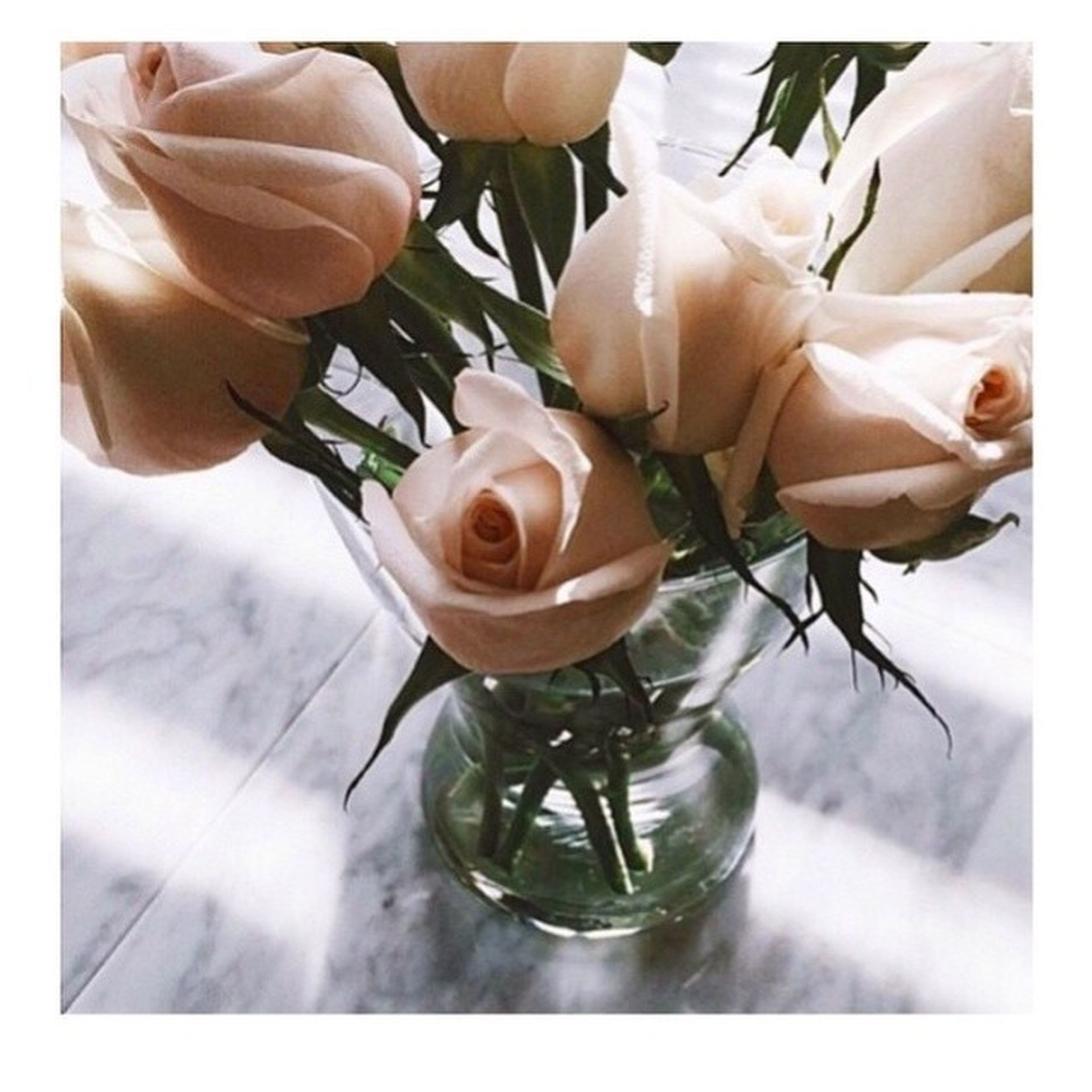 flower, indoors, freshness, vase, table, transfer print, fragility, petal, rose - flower, flower head, glass - material, auto post production filter, close-up, transparent, still life, white color, high angle view, glass, no people, beauty in nature