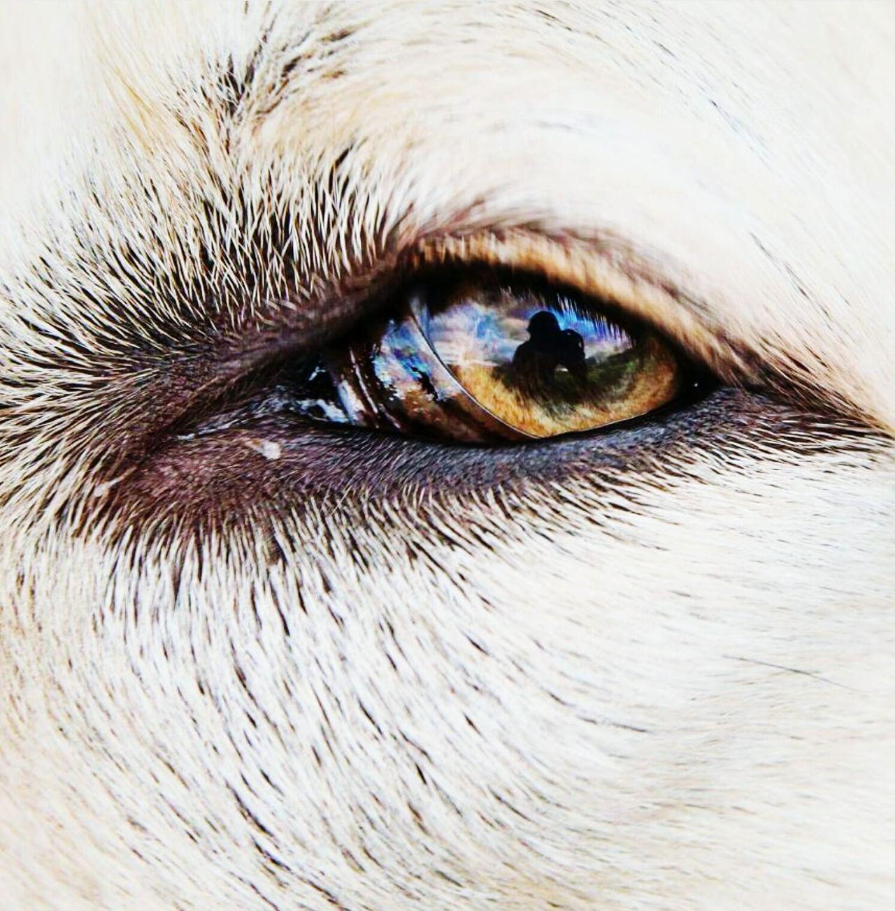 Close-up Eyelash Full Frame Eyeball Sensory Perception Iris - Eye One Person Dog Eye Dog Eyes Dog Eye4photography Dog Eyebrows Dog Eye View Real People Backgrounds Eyesight Eyebrow People Outdoors Day Adults Only Adult