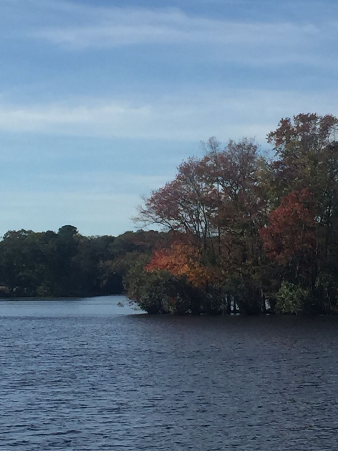 An island of autumn in the middle of Millsboro Pond! TreesAndWater Trees Autumn Autumn Leaves Beauty In Nature Landscape