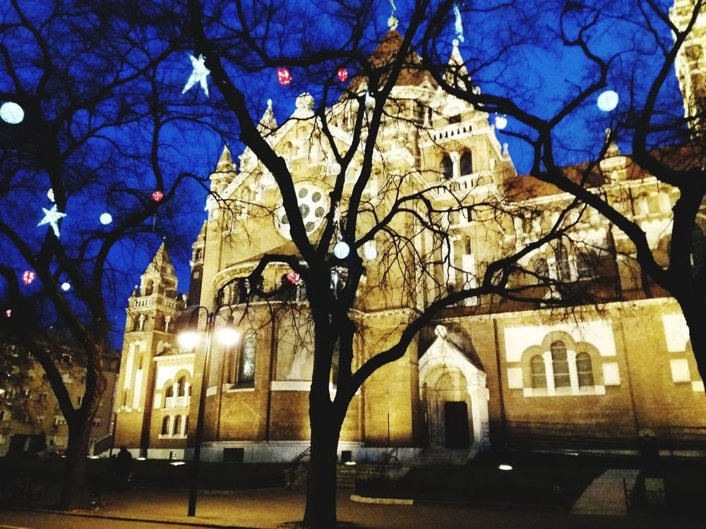 Lights Dome In Szeged Christmas Is Coming. ♥ Architecture Tree Building Exterior Night