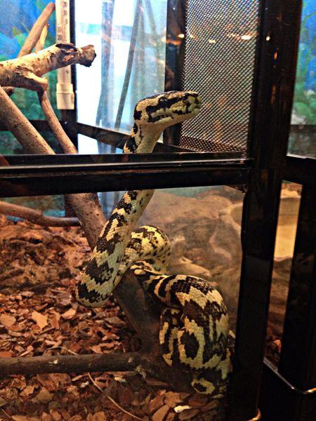 Snake Nsk Zoopark