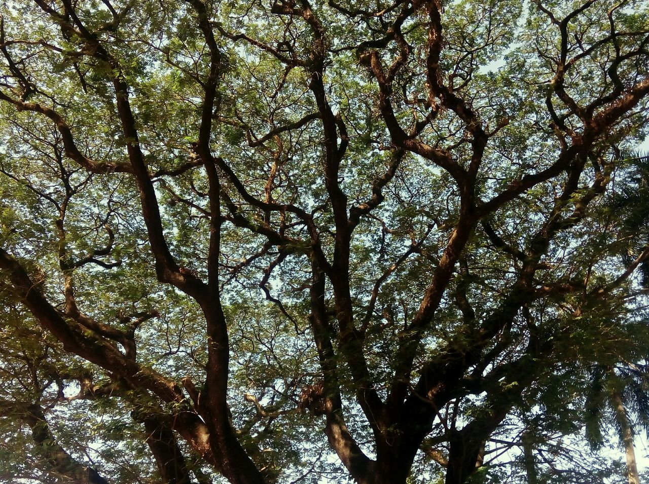 Wondrous patterns in nature...love it Pattern Pieces Treescape Tree Hugger Trees Collection For The Love Of Trees ~ Street Photography Tree Lover Tree Loves Sky