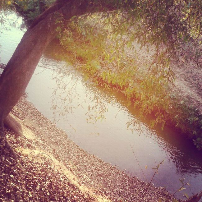TheViewICanNeverForget TheBrightLight MelodiousSoundOfStreamWater ¤ :-) ♥