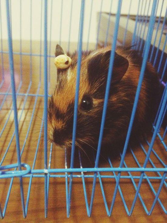 Cute Pets 它叫---Dashomen(呆傻萌)?