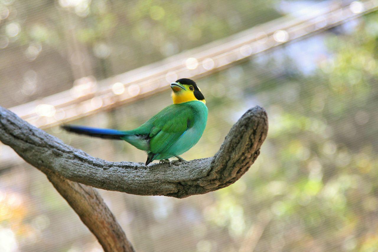Green Green Color Green Bird Birds Bird Birds_collection Bird Photography Birdwatching Bird Watching Birds_n_branches Birds And Branches Birds Wildlife Wildlife Wildlife Photography Birding