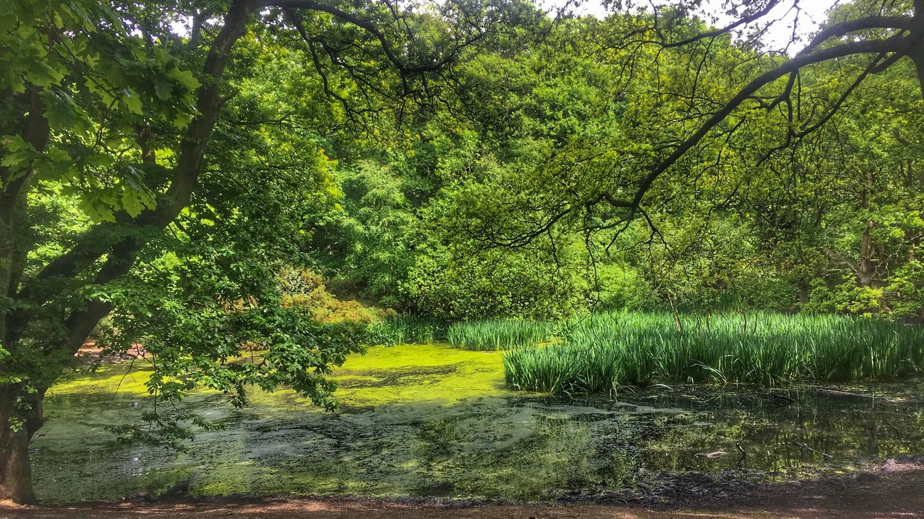 Tree Growth Nature Tranquility Tranquil Scene Beauty In Nature Scenics No People Green Color Landscape Outdoors Day Forest Grass Branch Neighborhood Map Hampstead Heath The Great Outdoors - 2017 EyeEm Awards