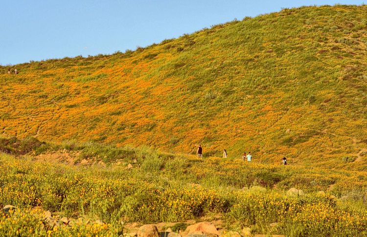 The California poppy fields at Walker Canyon Nature Beauty In Nature Autumn Mountain Tree Landscape Outdoors Scenics Growth Day Real People Grass Large Group Of People Sky People Spring California Poppies