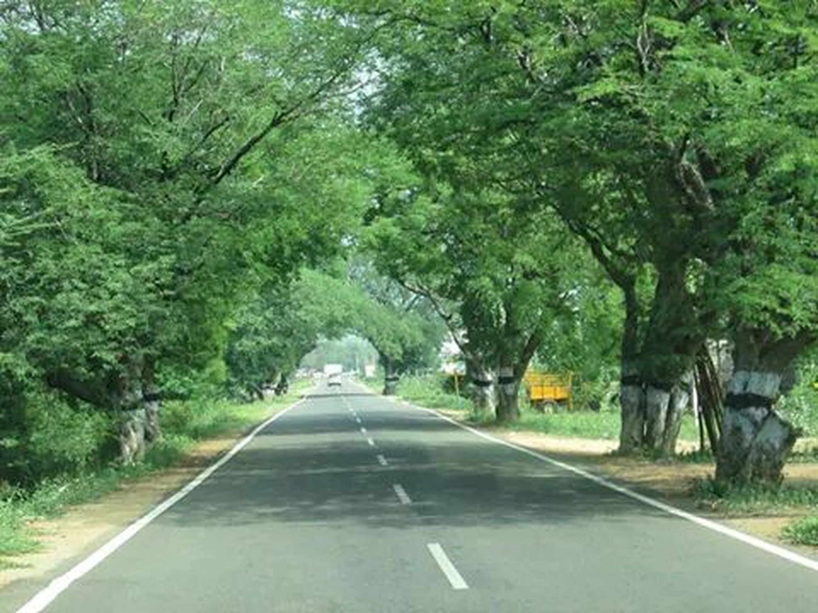 the way forward, transportation, road, tree, road marking, diminishing perspective, vanishing point, country road, empty road, asphalt, empty, growth, car, mode of transport, green color, day, nature, street, land vehicle, tranquility