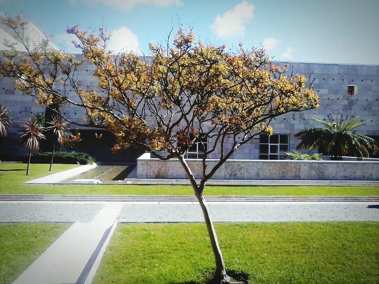 tree, no people, day, growth, grass, nature, outdoors, beauty in nature, sky, tranquility, building exterior, built structure, architecture, flower, branch, freshness
