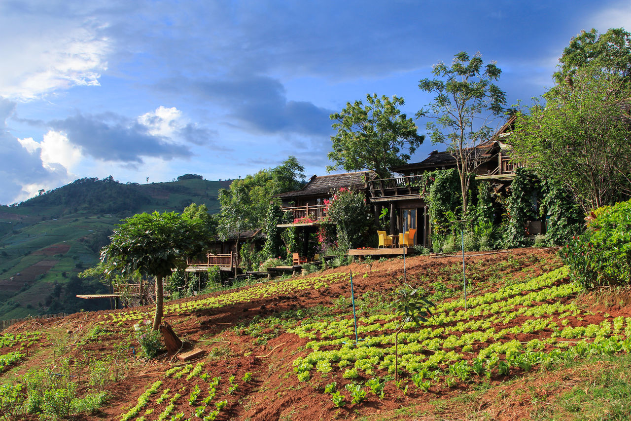 One day in Chiangmai Amazing Amazing View Chiang Mai Chiangmai Cottage Hill Hills Home House Landscape Landscape_Collection Mon Cham MONCHAM Mountain Moutain Nature Plant Plants Relax Sky Sky And Clouds Thailand Tree Unseen Unseenthailand