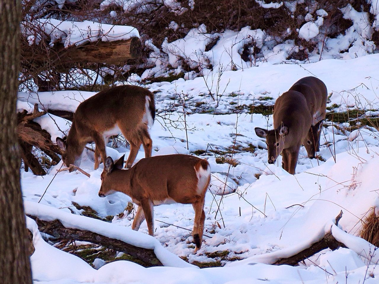 Beautiful stock photos of deer, Animal, Animal Themes, Animals In The Wild, Cold Temperature
