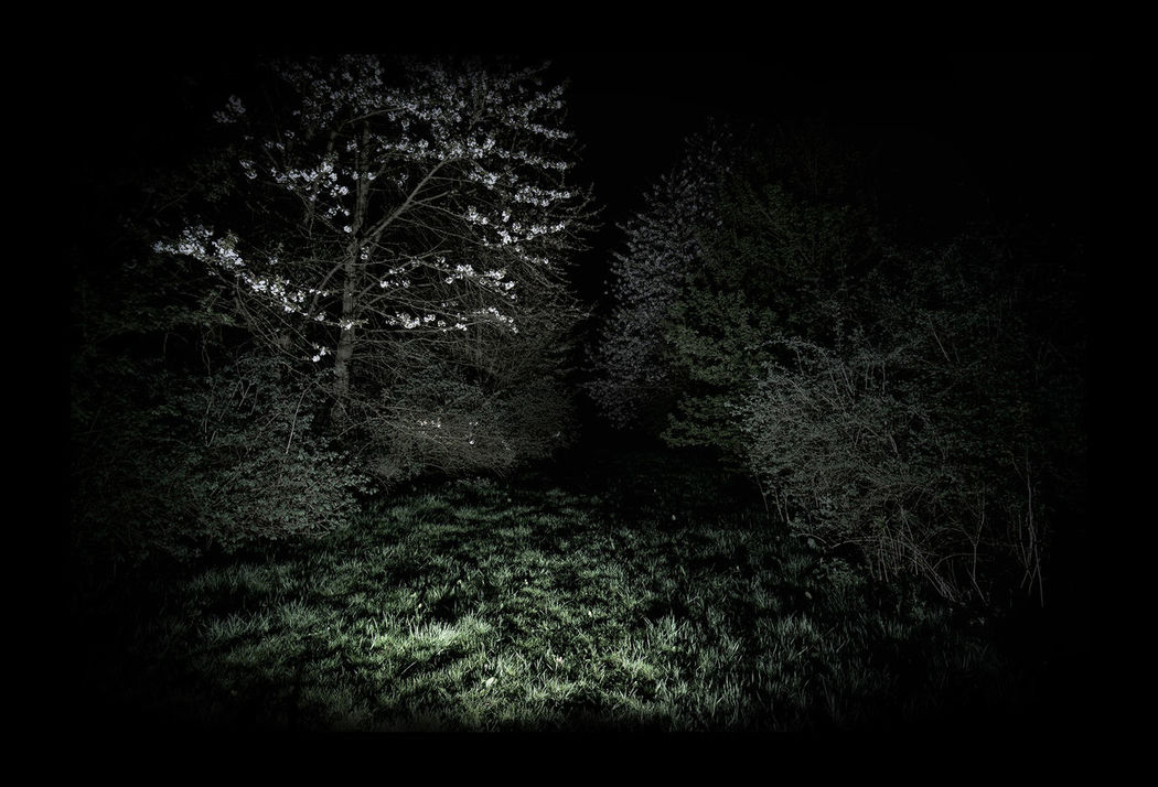 Blackly place Black Black Hole Blackly Cherrytree Dark Darkness And Light Dream Flash Flashinthedark Intothenight Memory Nature Night Nightmare Scary Scaryplaces Strange