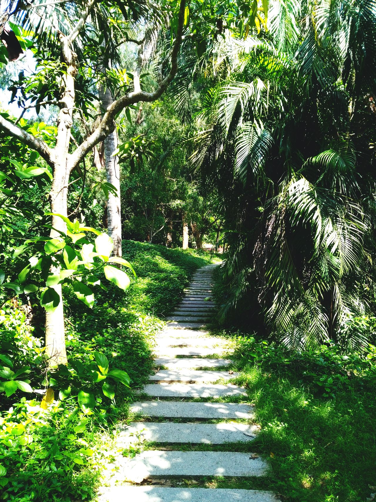 Adventure Club Adventure Time Forest Path Forest Trees 🌴🌴 Beauty In Nature Green Green Green!  Adventure Road Narrowpath Path In Nature